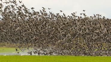 Nemunas Delta Regional Park. A Bird's Paradise